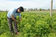 Trồng rau với công nghệ ủ phân Nhật Bản