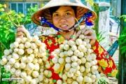 Cần Thơ: Phát triển nông nghiệp theo chuỗi giá trị