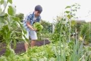 Gia đình Việt ở Nhật: Ông bố kỹ sư dành thời gian thuê đất, phủ kín bằng rau quả sạch cho vợ con thỏa nỗi nhớ quê hương