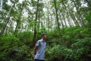 Nhàn nhã với rừng gỗ lớn
