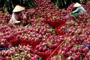"""Những trái cây Việt được """"xuất ngoại"""" sang các thị trường khó tính"""