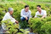 Tỷ phú cây dược liệu trên đất Đồng Tháp