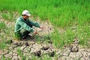 Biến đổi khí hậu ảnh hưởng tới năng suất và sản lượng cây trồng