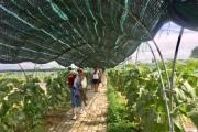 Trồng rau hữu cơ kết hợp du lịch mang lại hiệu quả kinh tế cao