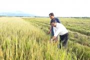 Việt Nam vào top 15 nước phát triển nông nghiệp hữu cơ: Có khả thi?