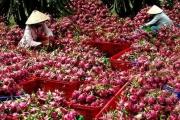 XK nông sản sang Trung Quốc: Không nên bỏ trứng vào 1 giỏ!
