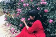 Yêu hoa hồng, nữ kế toán trồng cả vườn hồng rực rỡ trên sân thượng