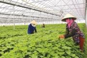 Lương Tài phát triển nông nghiệp công nghệ cao