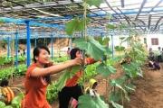 Giáo viên trồng rau cho bữa ăn bán trú