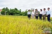 Quảng Trị: 10 năm bứt phá xây dựng nông thôn mới