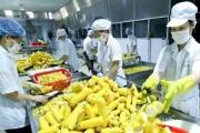 Hàng loạt doanh nghiệp Việt bị chơi xấu ở Algeria