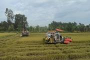 Kiên Giang: Tái cơ cấu nông nghiệp gắn với xây dựng nông thôn mới