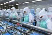 EU giảm nhập khẩu tôm Việt