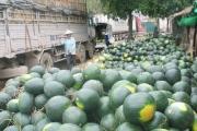 Xuất khẩu rau quả chính ngạch - con đường bền vững