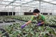 Hà Nội: Xây dựng, vận hành 35 mô hình sản xuất nông nghiệp áp dụng hệ thống đảm bảo chất lượng nội bộ