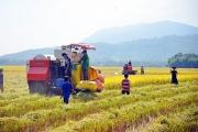 Lấy ý kiến để xây dựng, hoàn thiện Sách trắng Hợp tác xã Việt Nam