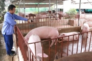 Tái cơ cấu ngành chăn nuôi, nuôi trồng thủy sản: Đòn bẩy ứng dụng công nghệ cao