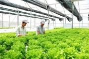 Cả nước có 12.581 doanh nghiệp đầu tư vào nông nghiệp