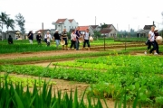 Hội An khai trương điểm tham quan làng rau hơn 400 tuổi