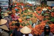 """Vải thiều tươi Việt Nam có """"visa"""" sang Nhật Bản"""