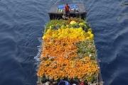 Nhộn nhịp chợ hoa Tết 'trên bến dưới thuyền' đầy sắc màu ở TP. Hồ Chí Minh