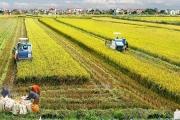 Từ 'khoán hộ' đến những đổi mới trong nông nghiệp