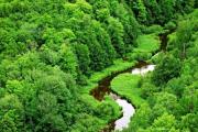 Khai thác rừng đặc dụng, phòng hộ có tiềm năng