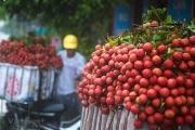 Quyết định của Nhật mở ra 'những cánh cửa mới' cho vải thiều Việt Nam