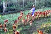 Hà Tĩnh: Loài vật nuôi giúp người dân thoát nghèo