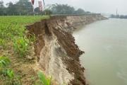 Phù Ninh- Phú Thọ: Người dân lo mất đất canh tác vì nạn khai thác cát