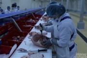 Doanh nghiệp đồng loạt 'né' khi bị truy về giá thịt lợn