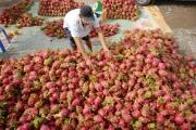 Nông sản ùn ùn kéo lên cửa khẩu, Bộ Công Thương tiếp tục đưa ra khuyến nghị