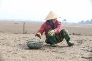 Tìm nguyên nhân ngao chết trắng bãi tại Hà Tĩnh