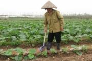 Hà Nội: 1 xã mỗi năm bán 400 tấn rau hữu cơ, thu hơn 6 tỷ đồng