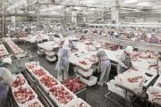 Gần 1.500 tấn thịt lợn Nga đã về đến Việt Nam
