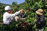 Động lực thúc đẩy phát triển nông sản Việt