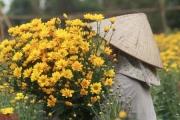 """Dịch Covid-19 khiến """"hoa cười người khóc"""", nông dân nghẹn đắng ước """"giá mà hoa ăn được tôi cũng đem tích trữ"""""""