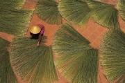 Thừa Thiên - Huế: Hồi sinh và phát triển làng nghề dùng cỏ bàng thay đồ nhựa