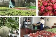 Nông sản Việt Nam tìm lối ra giữa mùa dịch