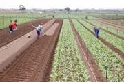 Chuyên gia nông nghiệp Hoàng Trọng Thủy: Nông nghiệp phải thích ứng để phát triển