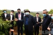 Dự kiến cuối tháng 5 sẽ xuất khẩu lô vải tươi đầu tiên sang Nhật Bản