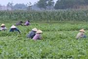 Đẩy mạnh vai trò hợp tác xã trong xây dựng nông thôn mới