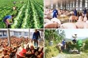 An ninh lương thực: Nghiên cứu các giải pháp ổn định nguồn cung lương thực, thực phẩm
