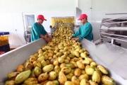 Người Nhật, Mỹ… mạnh tay mua nông sản Việt