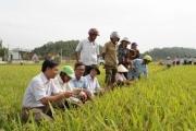 Nông dân gồng gánh giá phân bón vì thuế VAT bất hợp lý