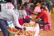 Bắc Giang đã sẵn sàng cho việc tiêu thụ vải thiều mùa vụ 2020