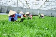Tổng cục Hải quan chỉ đạo vụ 20 DN nhập khẩu hạt giống kêu cứu