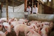 Gần 100 tỷ đầu tư vào các dự án nông nghiệp ở Quảng Nam