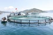 Ảnh hưởng dịch bệnh Covid-19, người sản xuất nuôi trồng thủy sản chật vật