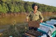 Nuôi ong bảo vệ rừng ngập mặn